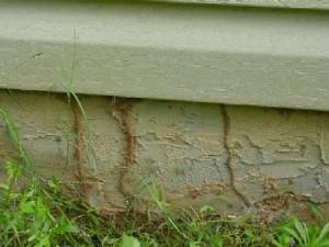 subterranean termite mud shelters--Thrasher Termite Pest Control Santa Clara and San Diego Counties