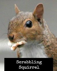 Squirrel (cc) Ildar Sagdejev