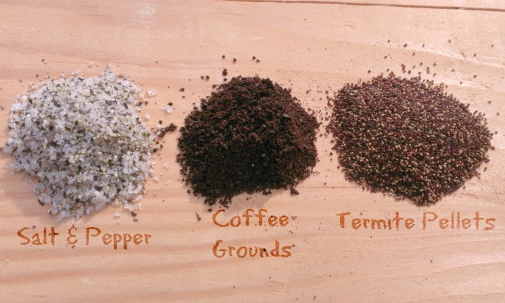 How To Identify Drywood Termite Droppings Thrasher Termite Pest Control