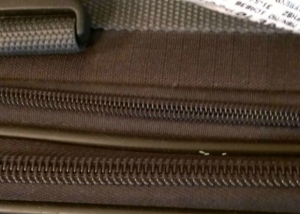 Bed Bug Eggs on Luggage Zipper