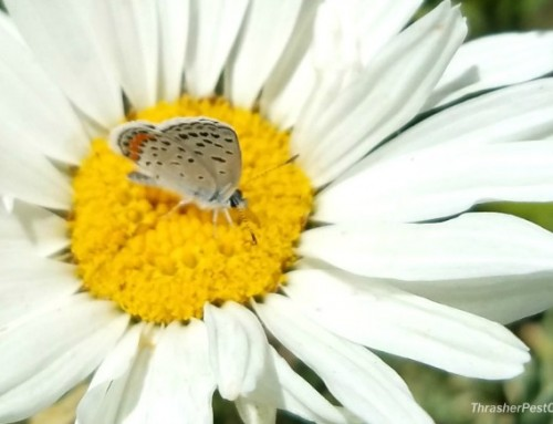 Wild Wednesday: Dainty Butterfly