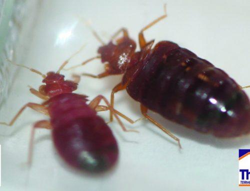 Bed Bug Awareness Week