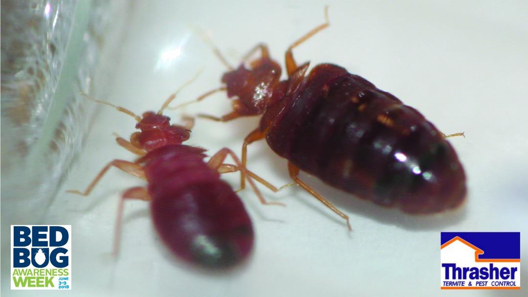 Bed Bug Prevention Week