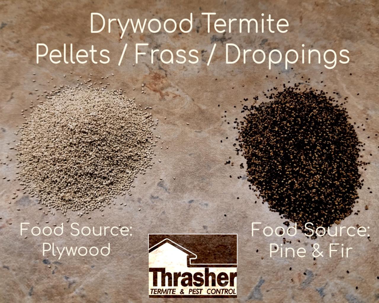 Drywood Termite Droppings Comparison