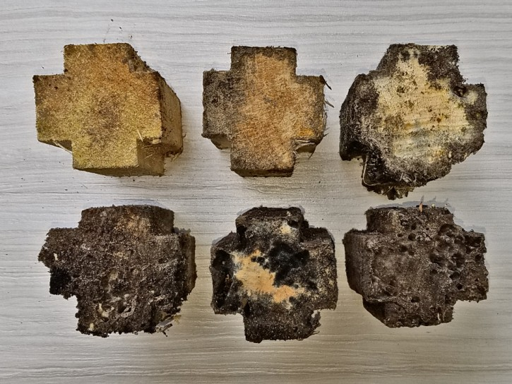 Subterranean Termite Monitoring Blocks after 3 months