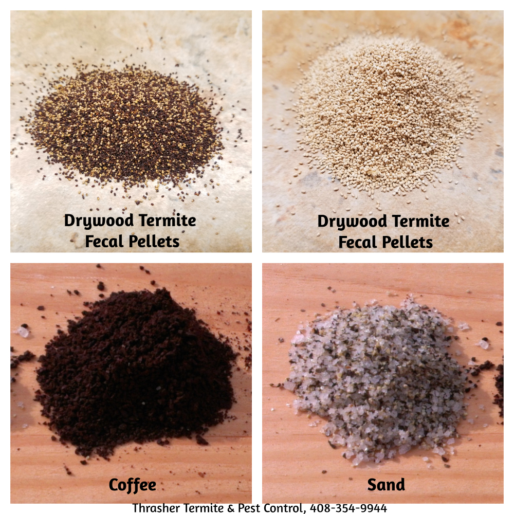 Drywood Termite Fecal Pellets Comparison